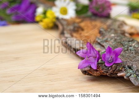 Closeup of violet purple bell-flowers on old wooden bark with rough texture background on a light wooden board card copy space. Selective focus