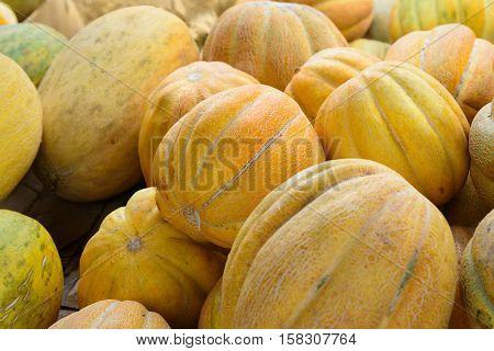 Sweet Melon Ethiopka, Ethiopian