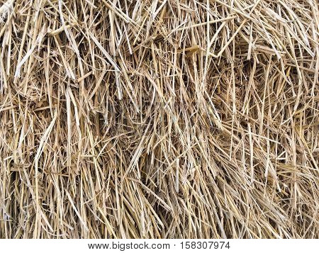 close up dry grass or hay texture
