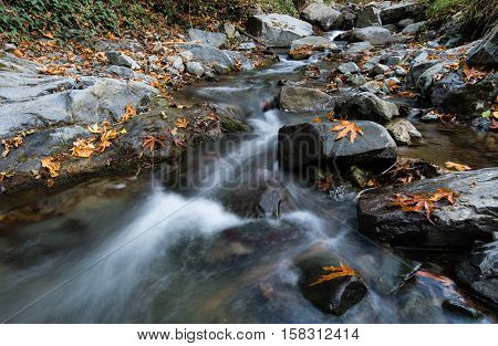 Water stream in the forest with yellow maple leaves on rocks in Autumn at Troodos mountains in Cyprus