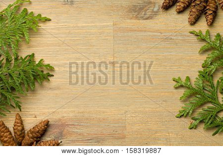 Green Thuja with multiple brown cones on a brown wooden board. Thuja on sides, Empty copyspace. Country, plant, green, simple, background, flat desk table