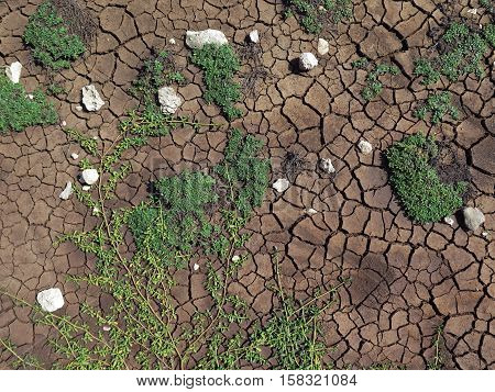Cracked earth floor after drying. Photographed in Guadeloupe, in the French West Indies. Light and natural colors.