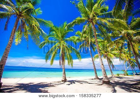 Beautiful tropical beach with green palm trees, white sand, turquoise ocean water and blue sky