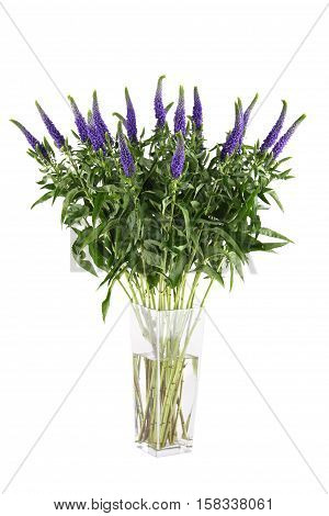 Bouquet of purple flowers Veronica in a glass vase. Isolated