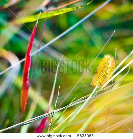 Autum background. Colorful grass leaves in autumn closeup.