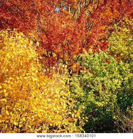 Autumn forest background. Forest trees with golden leaves in autumn. Beautiful colorful autumn leaves landscape.