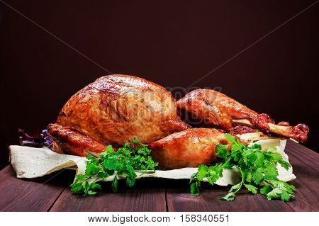 Roasted Turkey. Thanksgiving table served with turkey decorated with greens and basil on dark wooden background. Homemade roasted chicken. Christmas holiday dinner. Space for text