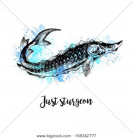 Hand drawn watercolor sturgeon. Retro sketches isolated. Vintage hypster collection. Doodle line graphic design. Black and white drawing fish sturgeon. Vector illustration.