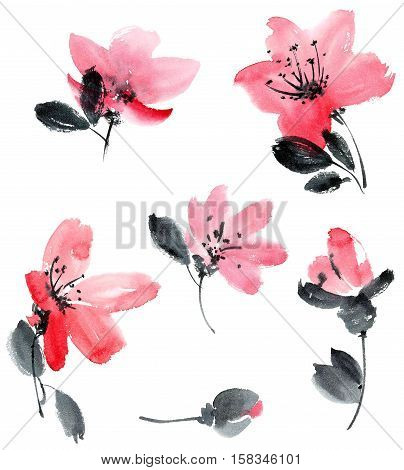 Watercolor and ink illustration of cherry flowers. Sumi-e u-sin painting.