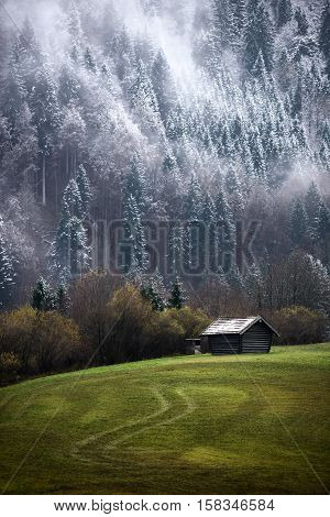 Geroldsee Forest During Autumn Day With First Snow And Fog Over Trees, Bavarian Alps, Bavaria, Germa