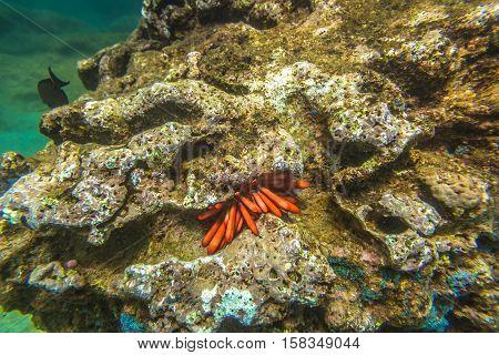 Underwater scene of Sharks Cove, North Shore of Oahu in Hawaii. Underwater marine life in Pacific Ocean.