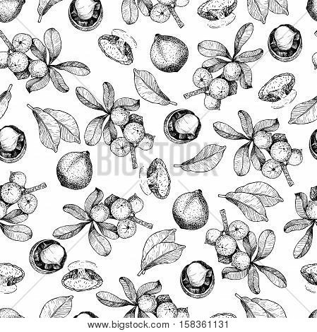 Vector seamless pattern of macadamia nuts and branch. Hand drawn engraved art. Healthy beauty hair nutrition. Use for design your fashion care products branding idenity advertisement promrotion.