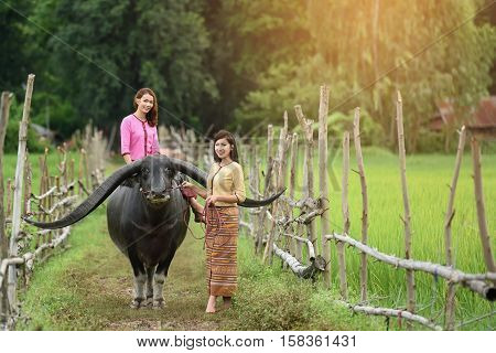 Portrait of two beautiful young traditional thailand girl and buffalo on rice green field