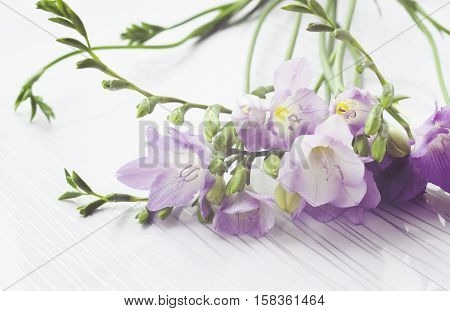 Bouquet Of Freesias Flowers