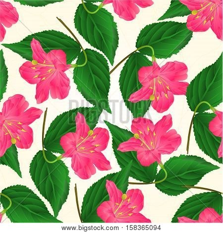 Seamless texture Pink flower decorative shrub Weigela vintage vector illustration