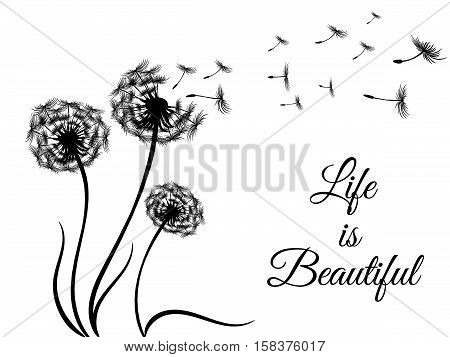 black vector sticker - print with flying dandelion seeds