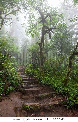 Hiking trail in lush rainforest La Fortuna Costa Rica