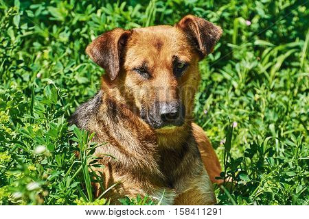 Portrait Of Street Dog