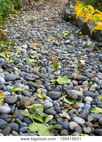 Walkway of pebbles strewn with fallen leaves