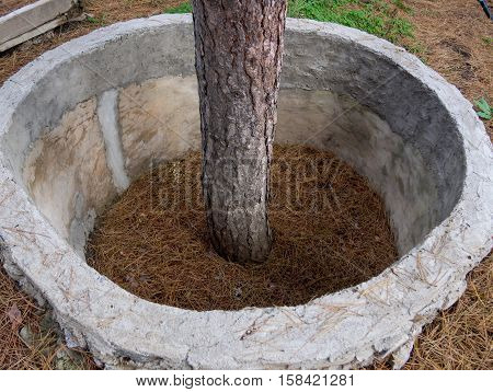 Protective structures of annular shape around the tree