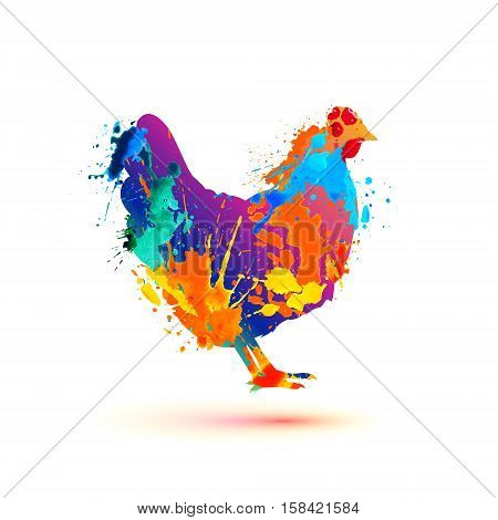 Farm bird. Hen silhouette of splash paint
