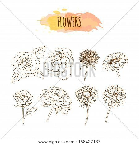 Hand Drawn Flower Set. Floral Illustration. Sketch of Chrysanthemum, Roses, Aster, Camelia, Peony and Dahlia