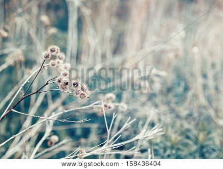 Beautiful fairy dreamy magic burdock thorns toned with  filters in retro vintage color pastel washed out style soft selective focus with lens sun flare copyspace for text