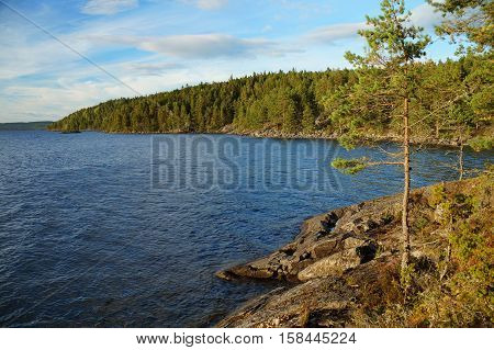 The wild rocky shoreline is covered by moss and overgrown by a temperate coniferous forest. Lake Stora Le, Dalsland, Sweden, August 2016.