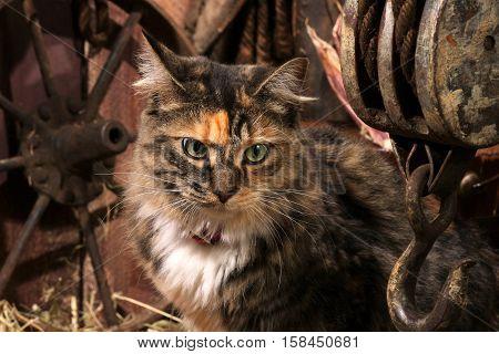 Multi colored farm cat sitting in a barn.