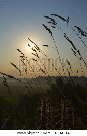 A Photo Of Few Grass In The Sunset