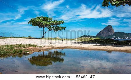 The green tree reflected in a puddle and Guanabara Bay at sunny day with Sugarloaf Mountain in the background , Rio De Janeiro, Brazil