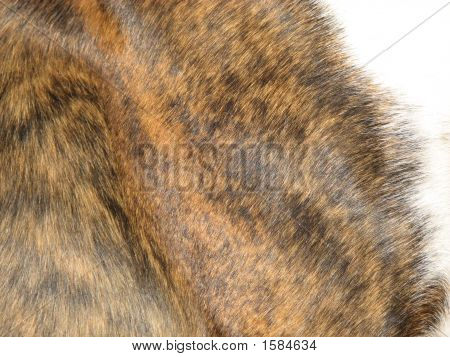 Coat Of A Boxer Dog