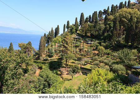 Liguria coast with terraces and Mediterranean Sea near Portofino Italy