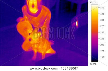 Thermal image photo french bulldog whit person dog color scale
