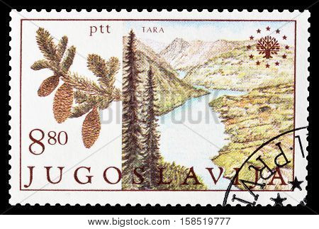 YUGOSLAVIA - CIRCA 1982 : Cancelled postage stamp printed by Yugoslavia, that shows National park Tara.