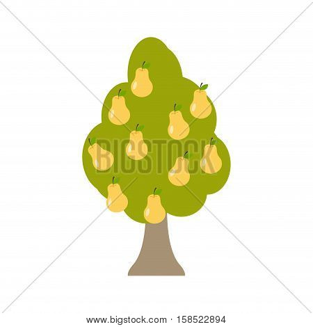 Pear Tree Isolated. Garden Wood With Pears On White Background. Large Fruit Harvest