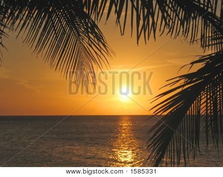 Sunset Through The Palm Trees Over The Caraibe Sea, Roatan Island, Honduras