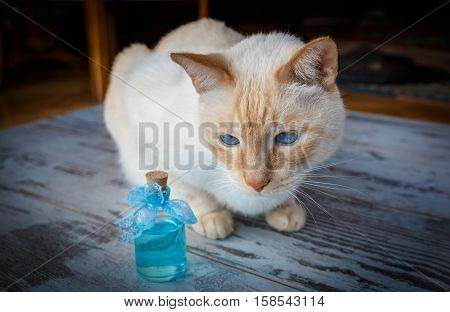 Blue-eyed Cat With Blue Cologne