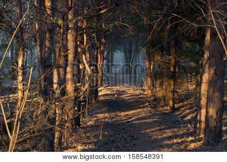 footpath in a mistic forest blue fog