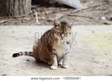 Grey Tabby Cat Winks
