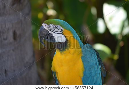 Perched blue and yellow macaw bird in a tree