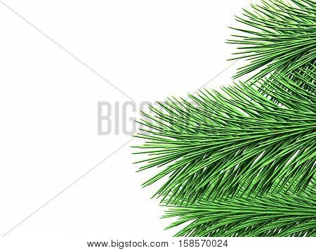 Fir branches with green needles are shown on white background
