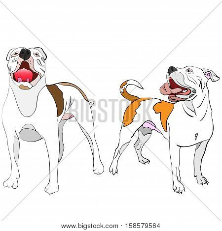hand-drawn outlined vector illustration of a couple of posing american bulldogs