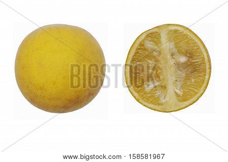 Trifoliate citrus (Poncirus trifoliata). Called Japanese bitter orange Hardy orange and Chinese bitter orange also