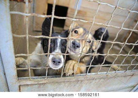 Abandoned dogs in the kennel, homeless dogs behind bars in an animal shelter.Sad looking dog behind the fence looking out through the wire of his cage