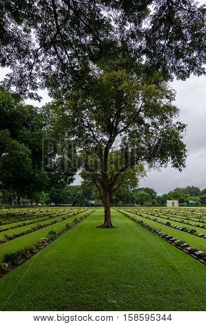 Kanchanaburi War Cemetery (Thailand) graves and a tree