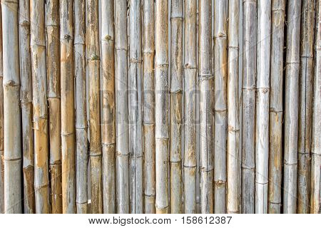 bamboo fence background bough, ornamental, forest, twig, texture, pipes, bunch,