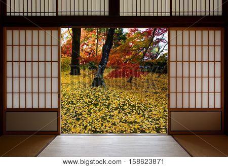 Japanese sliding wood doors open to an autumn sight of fallen yellow ginkgo leaves