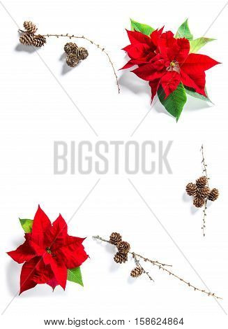 Red Christmas flower poinsettia with pine cones. Floral flat lay background. Minimalism concept