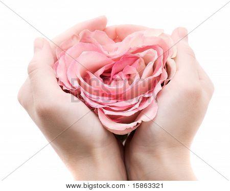 Rose in palms